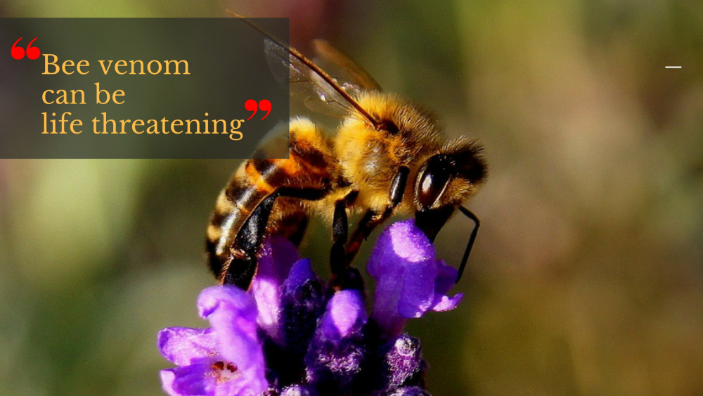 fact about bees