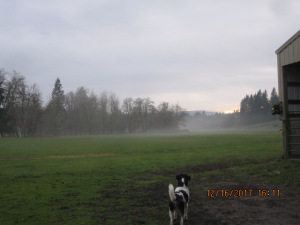A dog stands at the edge of the field while fog begins to form.