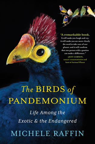 The Birds of Pandemonium (2014)