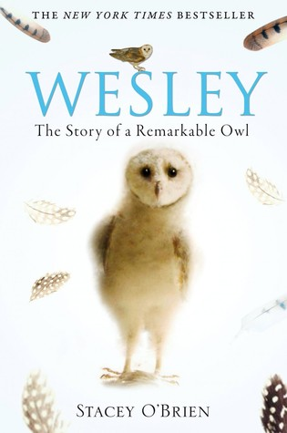 Wesley The Remarkable Story Of An Owl (2009)